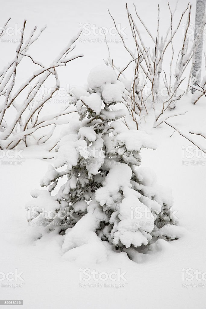 After snowstorm. Street lamp. royalty-free stock photo