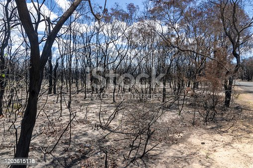 1195174769istockphoto After The Bushfire, Queensland, Australia 1203615118