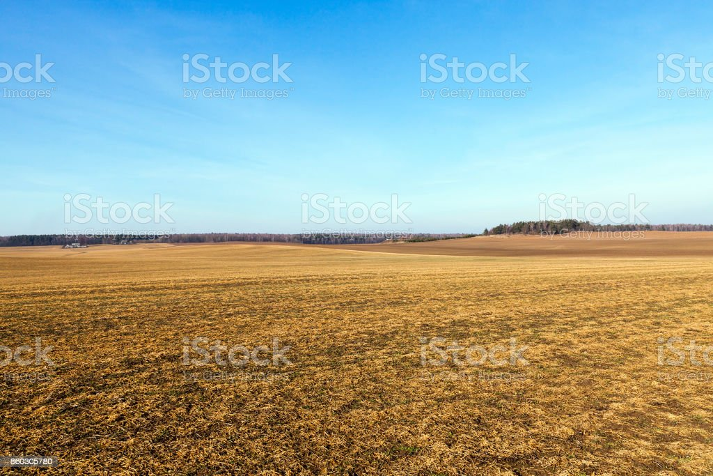 After the fall, the sky agricultural field with yellowing grass dying in the autumn season. Photo of landscape, blue sky in the background Agricultural Field Stock Photo