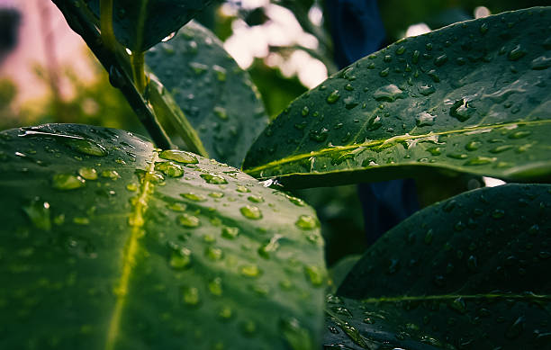 After The Rain The water drop after the rain grafiker stock pictures, royalty-free photos & images