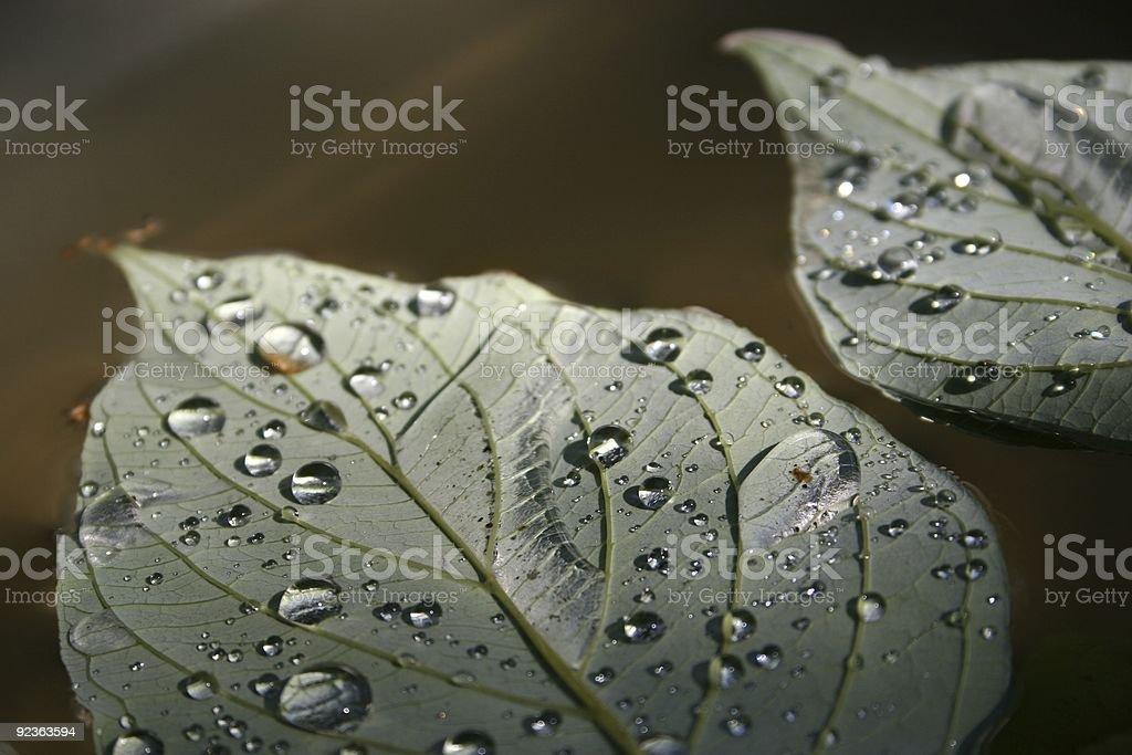 Nach dem Regen Lizenzfreies stock-foto