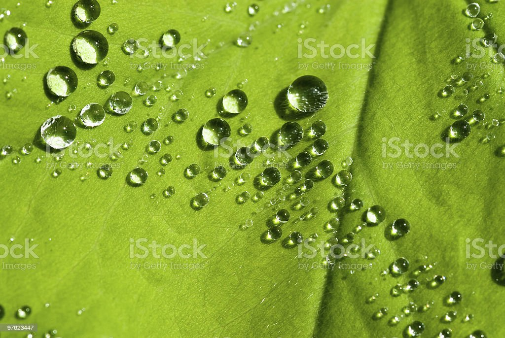 After the rain series royalty-free stock photo
