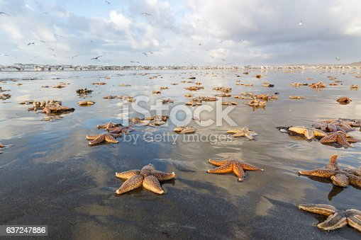 Lots of dead starfish on the dutch coast of