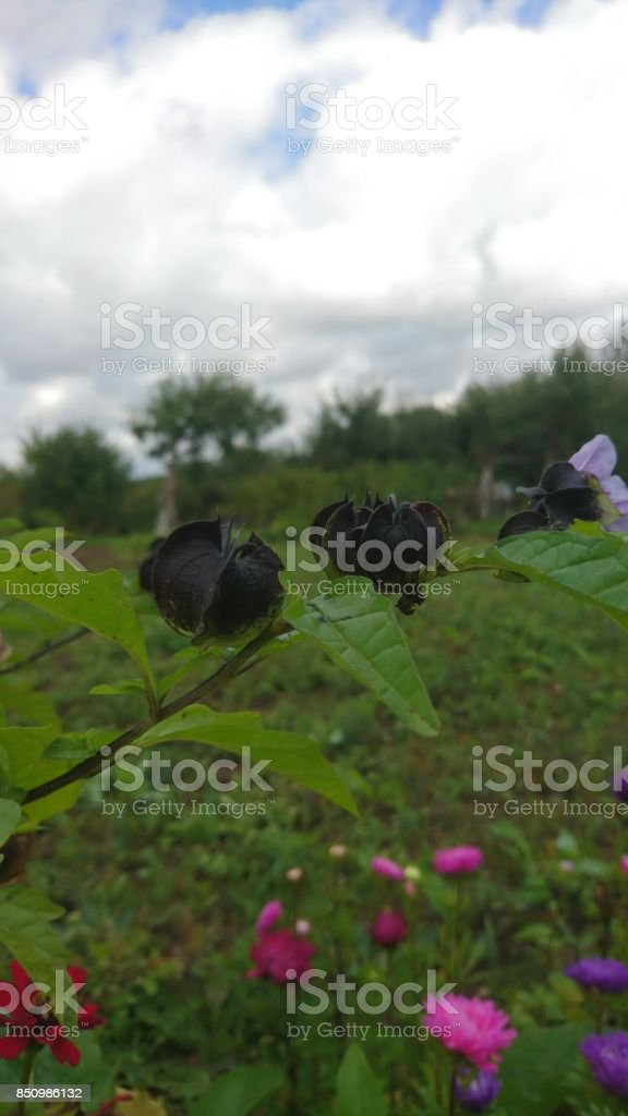 After violet blossoms in garden in autumn stock photo