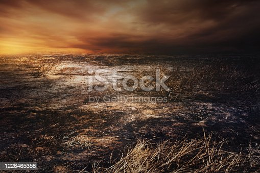After wildfire  with dust and ashes.Global warming, save planet, protect forests, conserve environment concept background.