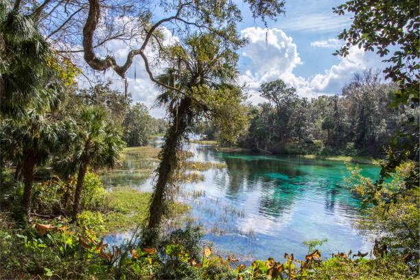 afternoon at rainbow springs - estuário imagens e fotografias de stock