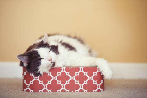 katze-mittagsschlaf - katzen kissen stock-fotos und bilder