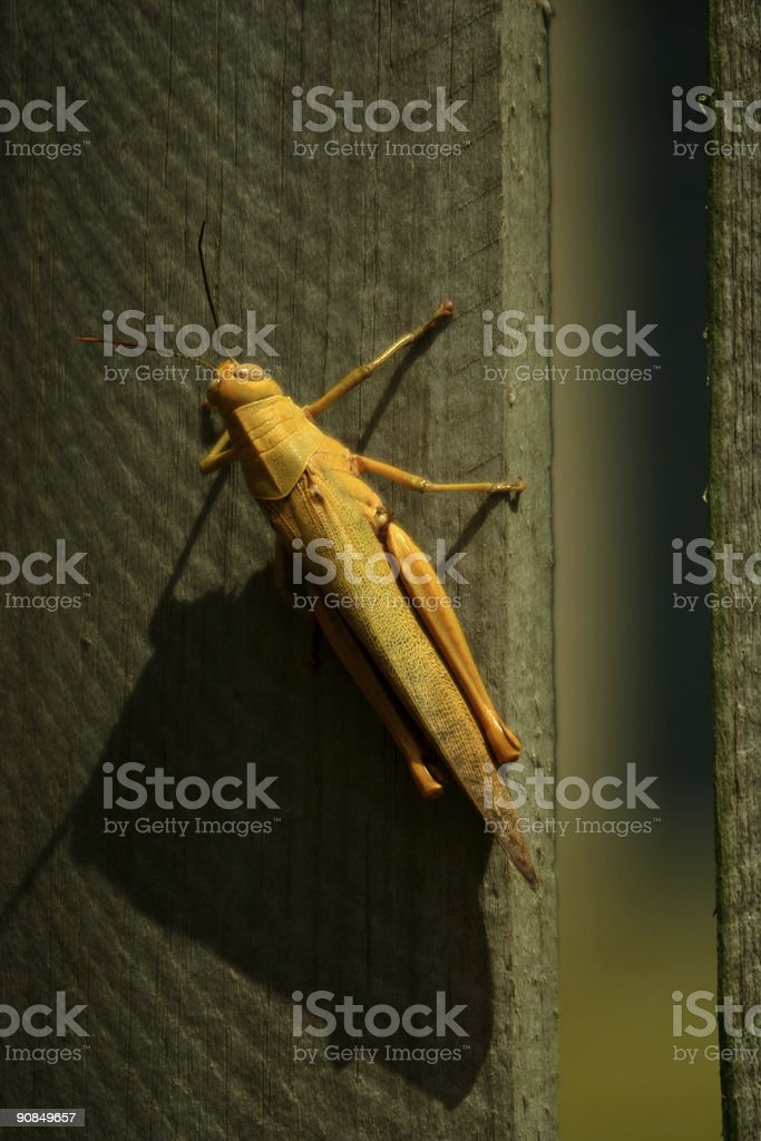 Afternoon Cricket royalty-free stock photo