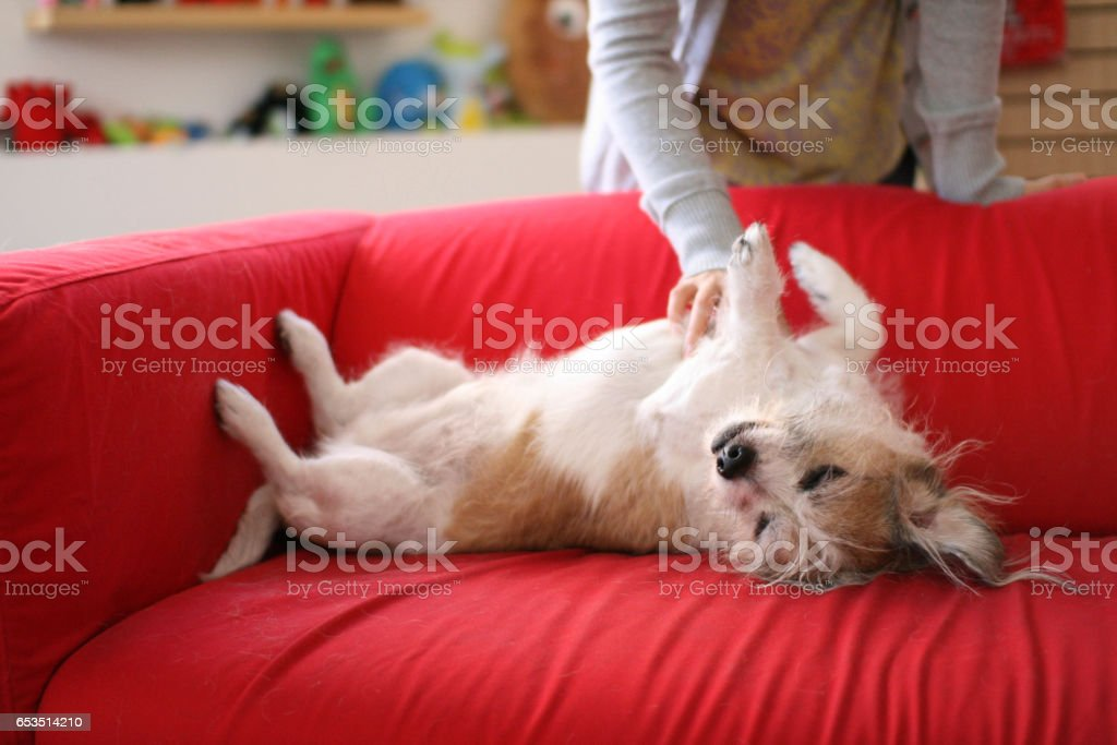 Afternoon happiness stock photo