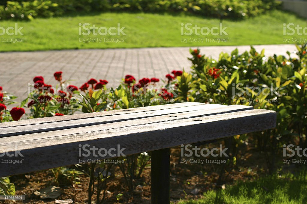 Afternoon Park royalty-free stock photo