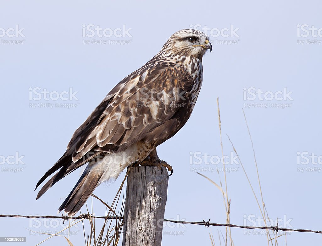 Afternoon Perch stock photo