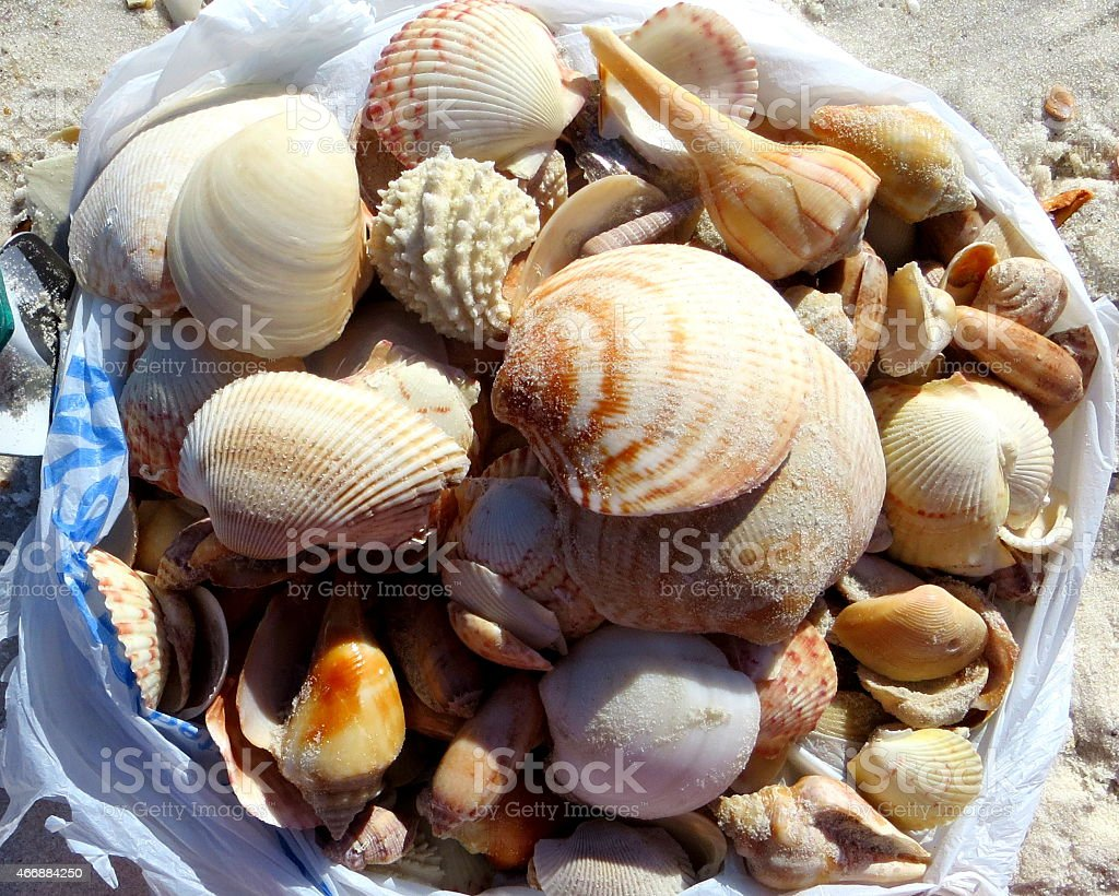 Afternoon Shelling by Digging March 7 2015 stock photo
