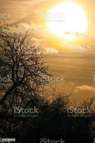 Photo of Afternoon sky with clouds and sun before sunset with tree branches silhouette in foreground