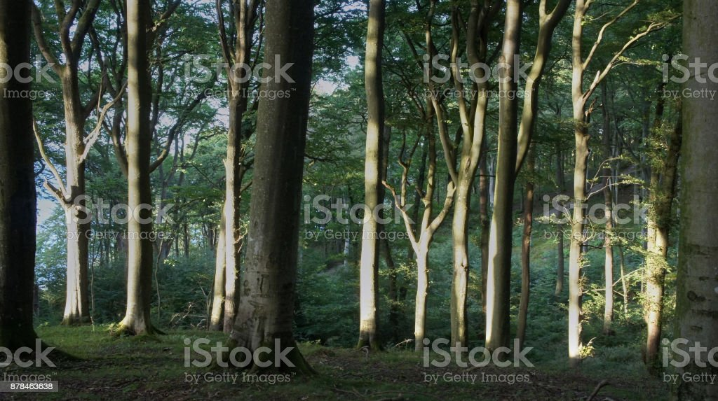 Afternoon Sunlight in Sweden - Royalty-free Bush Stock Photo