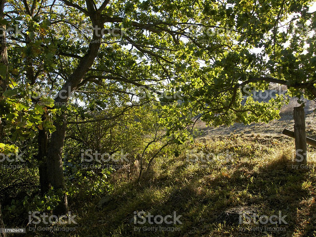 Afternoon sunlight through the trees royalty-free stock photo