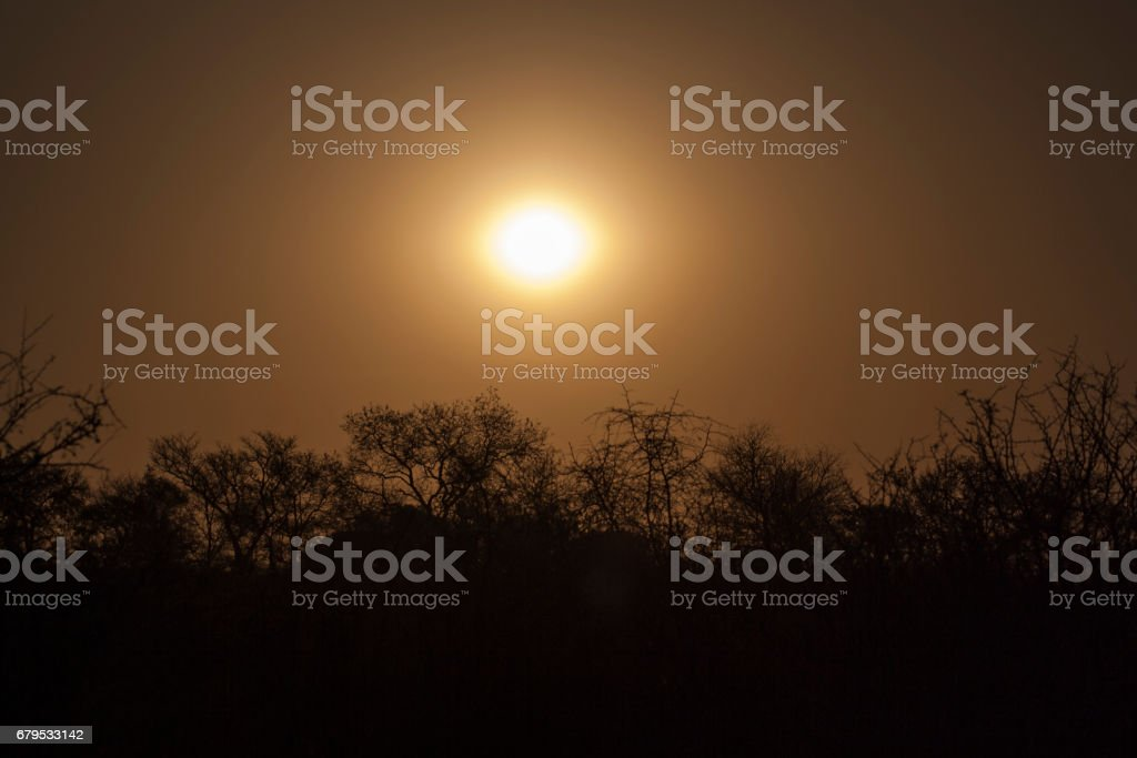 Aftrenoon sun, Sabi Sands, South Africa royalty-free stock photo