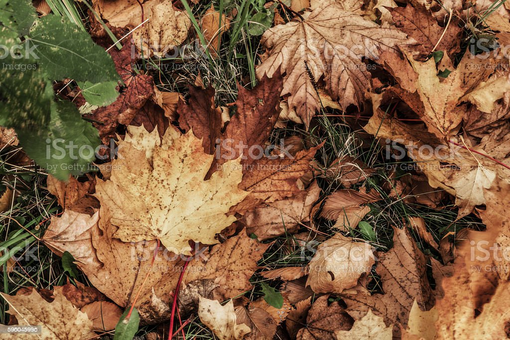 again autumn mood royalty-free stock photo