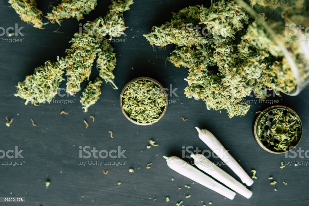 against the background of fresh cones of cannabis flowers rolled joint with marijuana zbiór zdjęć royalty-free