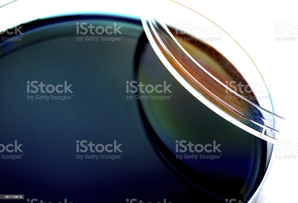 Agar plate royalty-free stock photo
