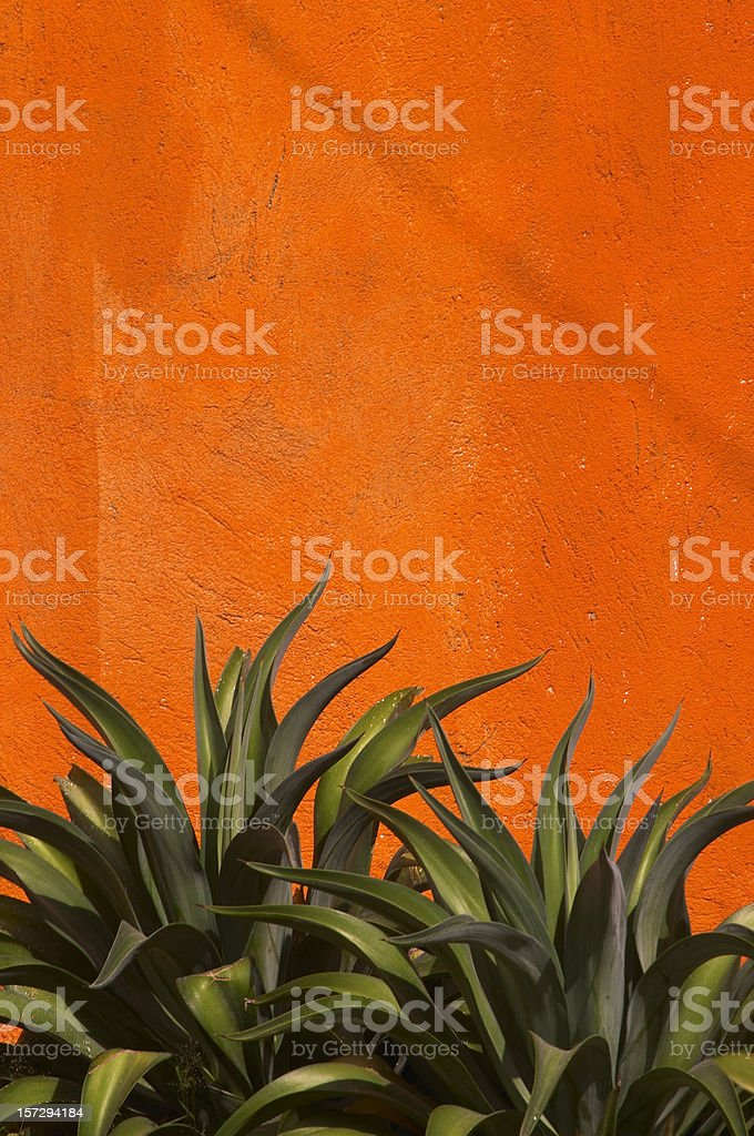Agave Cactus, Vivid Orange Stucco Wall, Green, Vertical, Copy-space stock photo