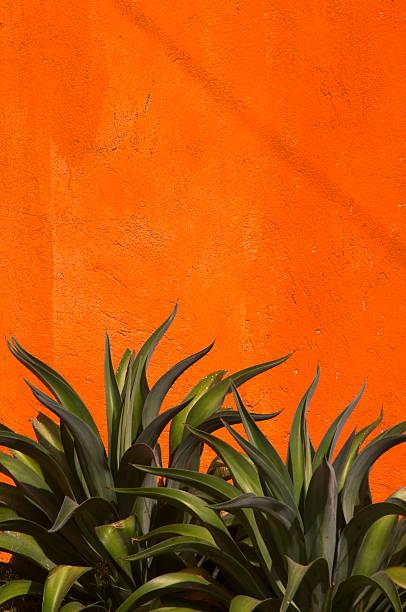 アガーペサボテン、鮮やかなオレンジ色のしっくいの壁、緑色、垂直、コピースペース ストックフォト