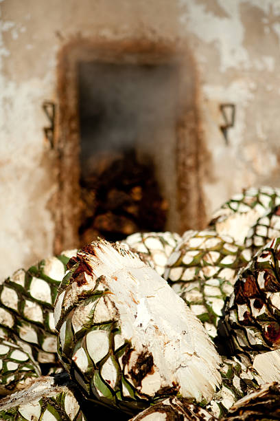 Agave in front of adobo oven stock photo