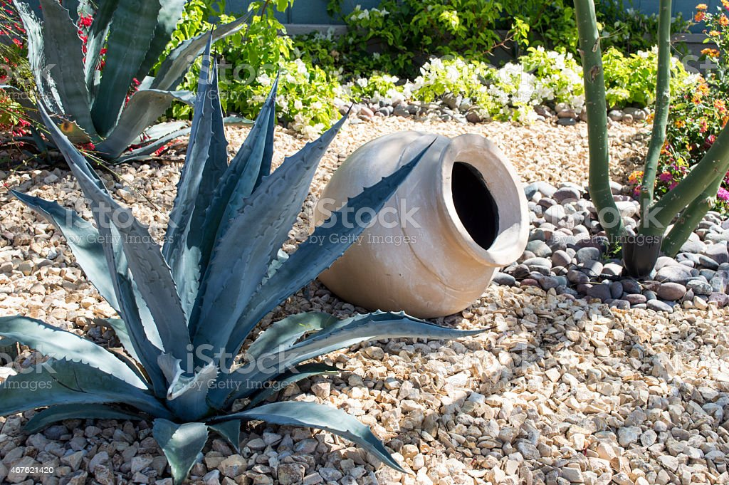 Agave in Front Yard in Horizontal format, stock photo