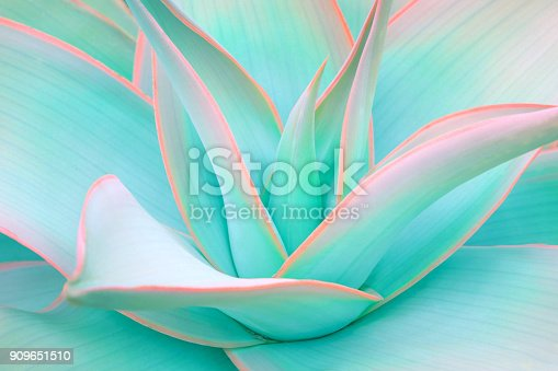 istock agave leaves in trendy pastel neon colors 909651510