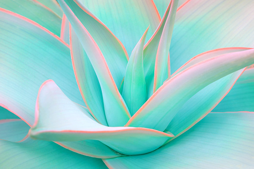 agave leaves in trendy pastel neon colors