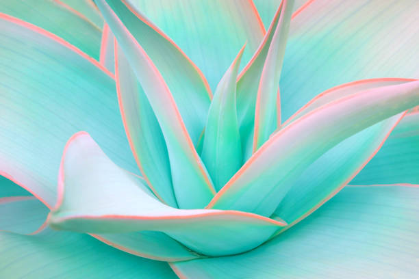 agave leaves in trendy pastel neon colors - flowers stock photos and pictures