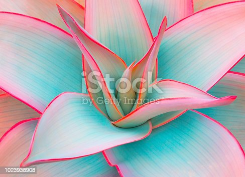 agave leaves in trendy pastel colors for design backgrounds