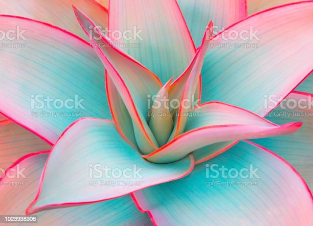 Photo of agave leaves