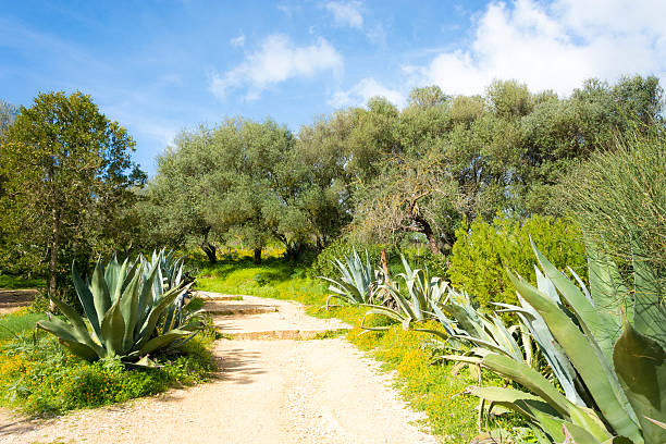 Agave Lined Footpath stock photo