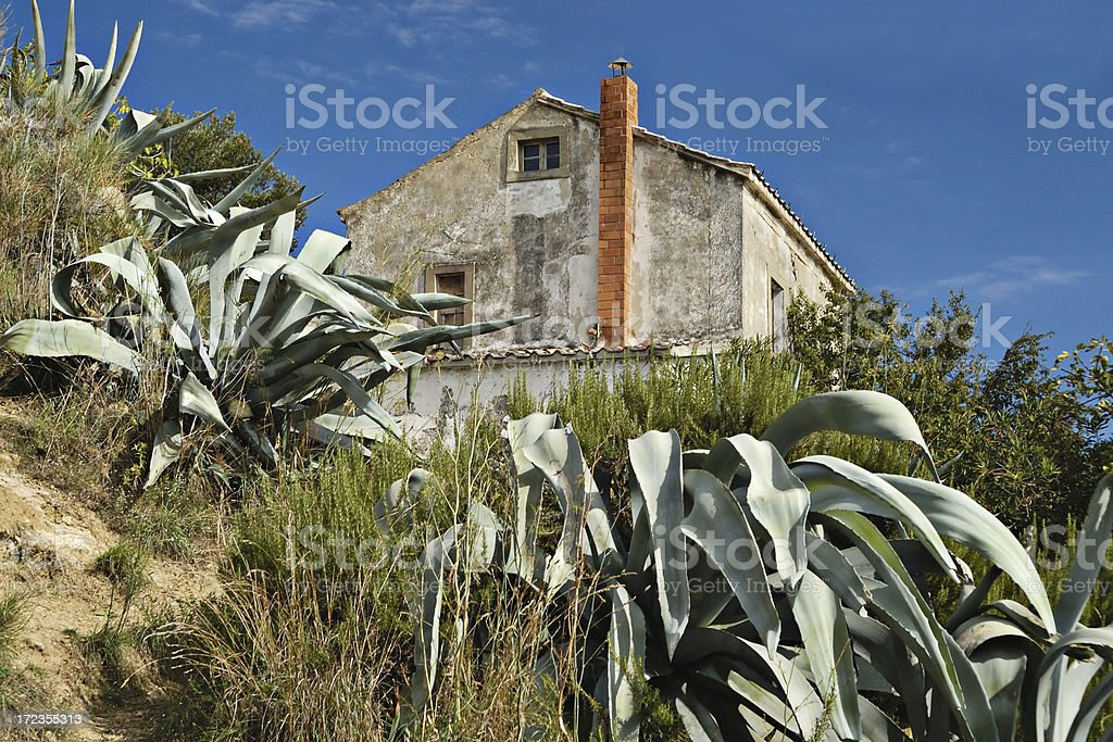 Agave royalty-free stock photo