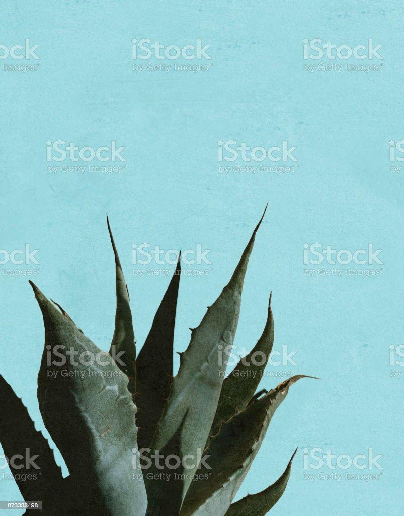 Las sombras y la planta de agave - foto de stock
