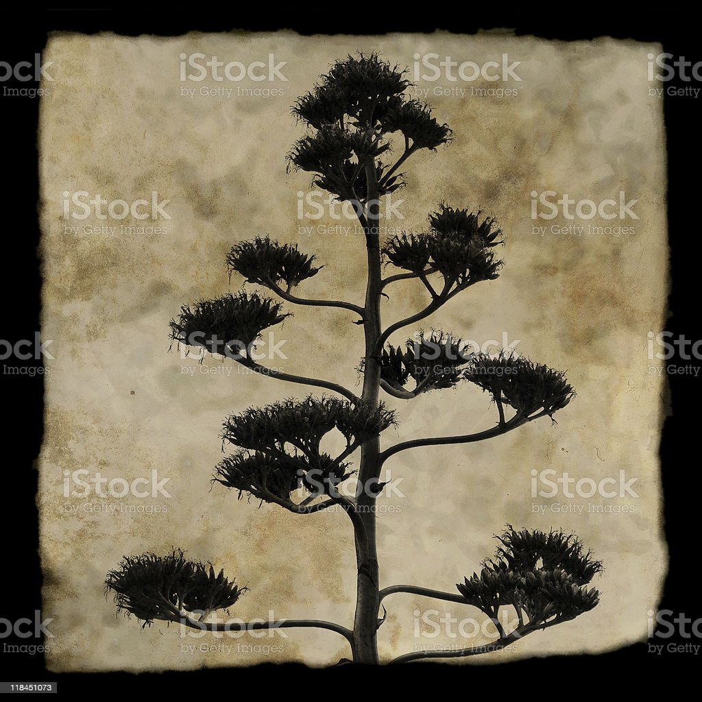 agave plant silhouette royalty-free stock photo