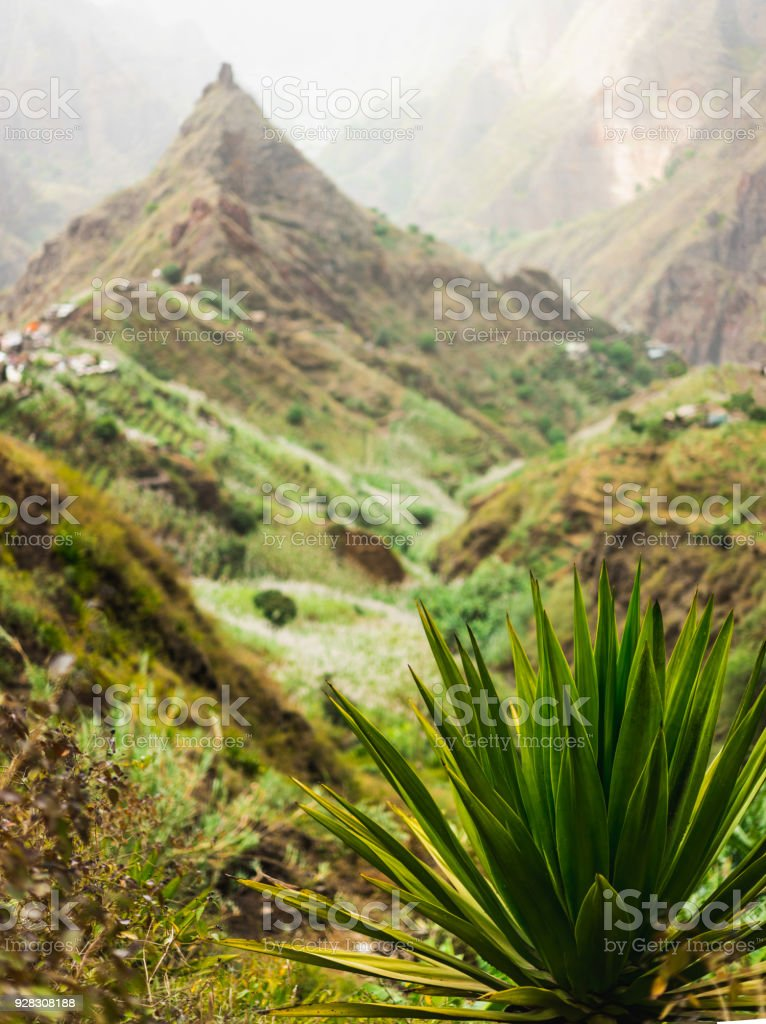 Agave plant with lombo de pico in Xo-xo valley in background. Trakking route 202 over Rabo Curto to Ribeira da torre. Santo Antao island, Cape Verde stock photo