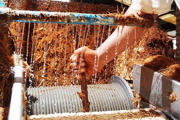tequila la production de sirop d'Agave - Photo