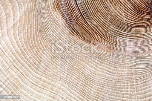 Freshly cut of tree. Nature abstract background.