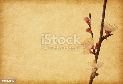 istock Aged paper texture with apricot  blossom. 538623421