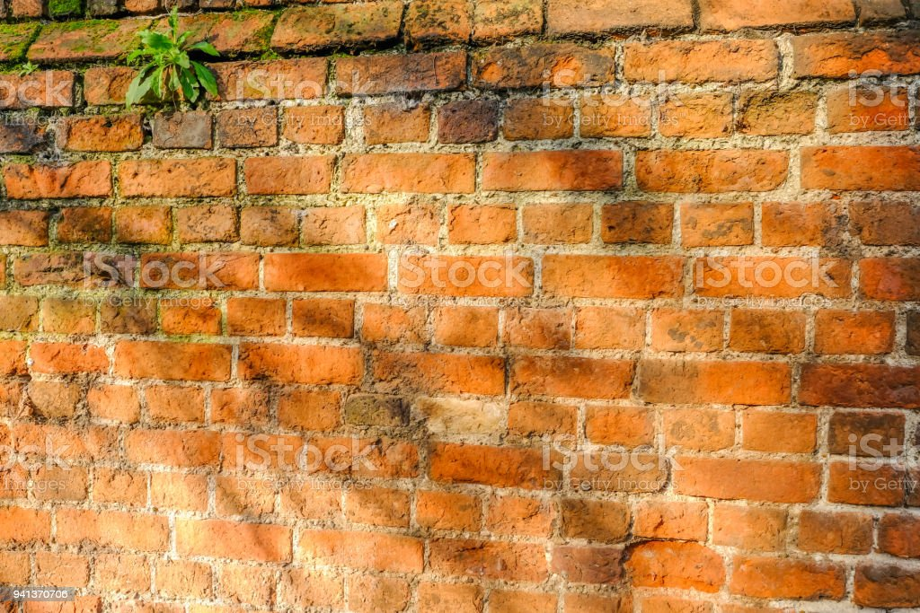 Aged red brick wall with sunlight. stock photo