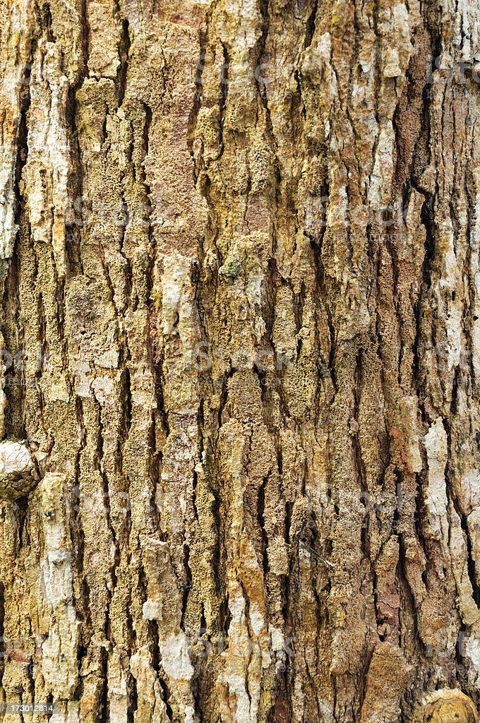 Aged Tree Bark Texture royalty-free stock photo