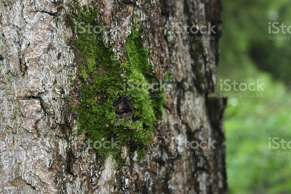 Ageing  tree bark royalty-free stock photo