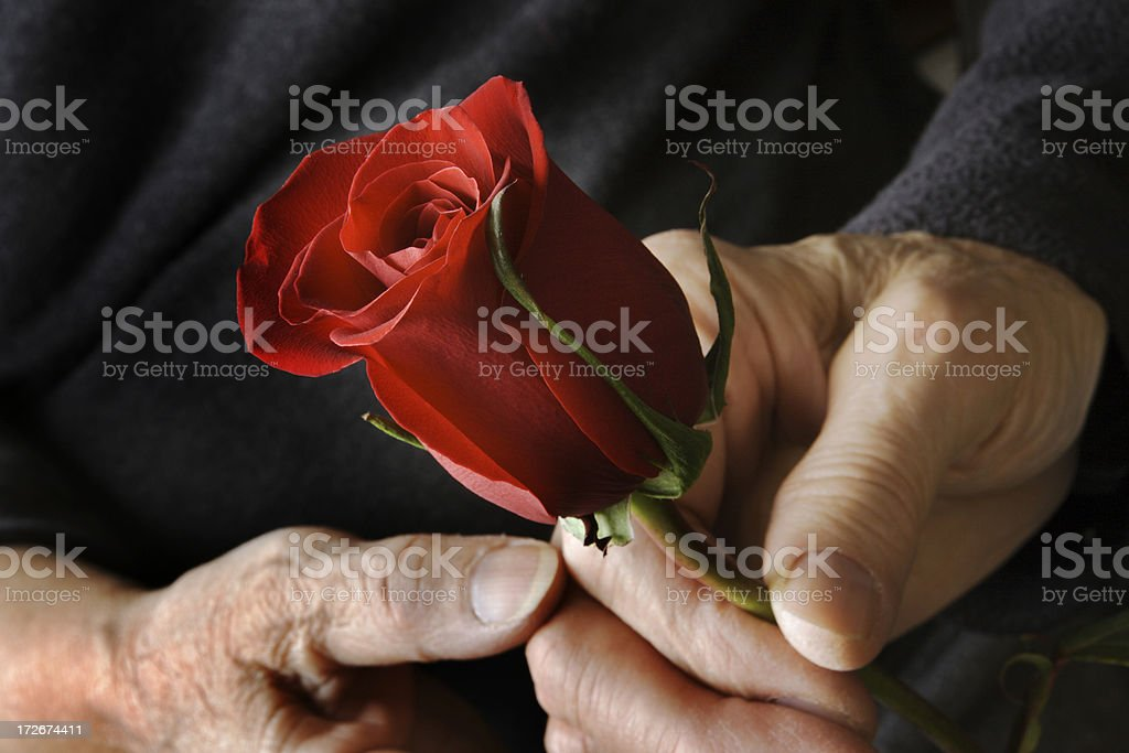 Ageless Love—Senior Adult Couple, Holding Hands and Red Rose royalty-free stock photo