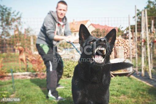 istock Aggressive dog 614507658