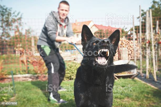 Aggressive dog picture id614507658?b=1&k=6&m=614507658&s=612x612&h=e3xh17fsbmmwv6bat6oc n3vjs0797aahv7pulqrjk4=