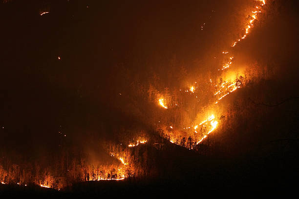 Aggressive forest fire stock photo