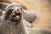 aggressive seal