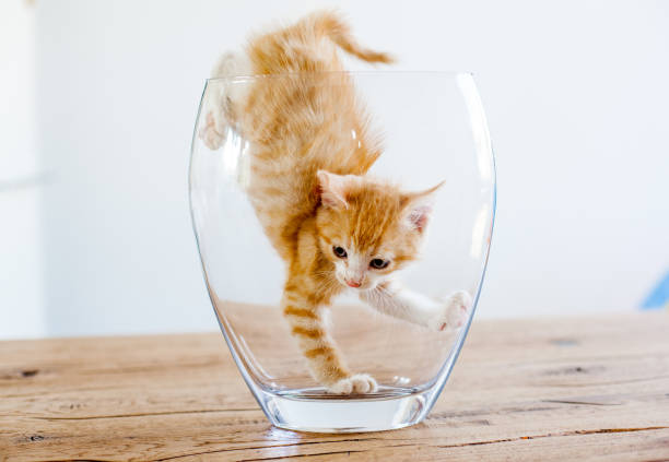 Royalty Free Cat In Vase Pictures Images And Stock Photos Istock