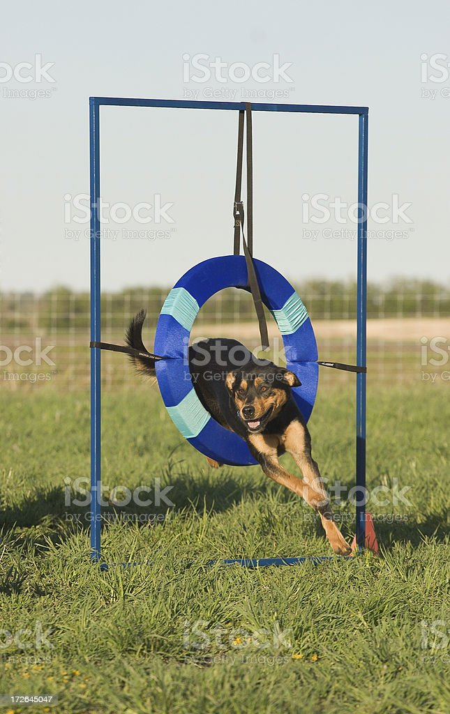 Agility tire obstacle royalty-free stock photo
